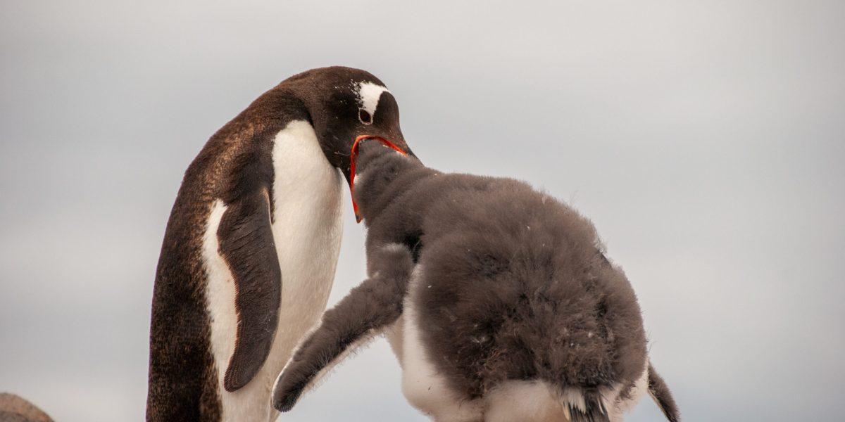 Penguins!